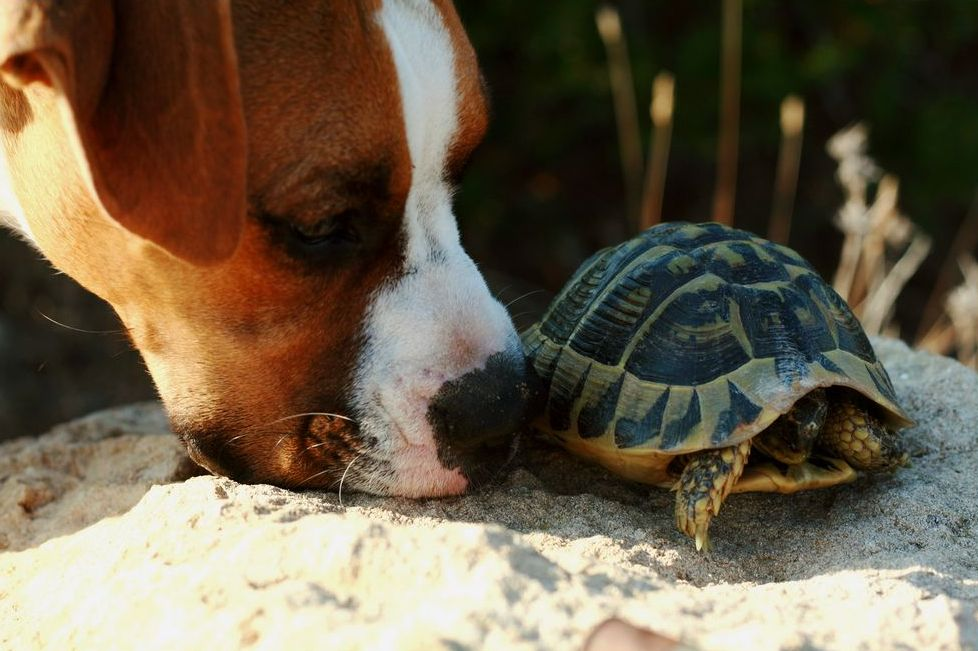 Life_tortue_hermann_12_predation_chien.jpg